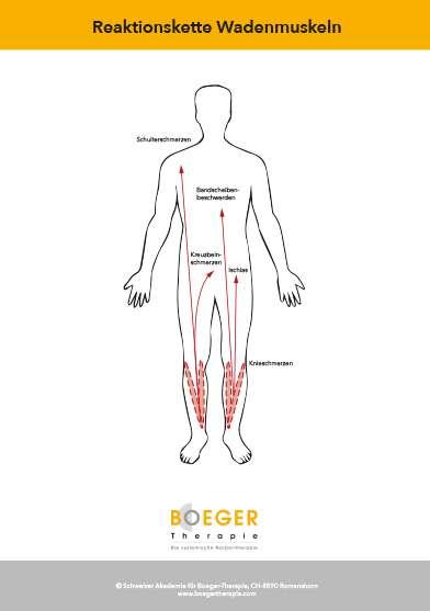 Reaktionskette Wadenmuskeln – Download | Poster | Boeger Shop